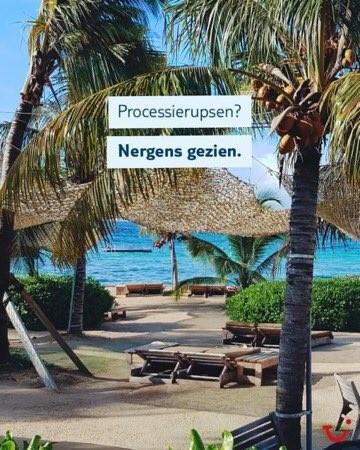 processierupsen_TUI
